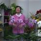 Embedded thumbnail for Orchidea Phalaenopsis, pestovanie - video návod